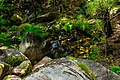 Nature calls (42902538244).jpg