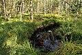 Nature reserve Rájecká rašeliniště in summer 2014 (5).JPG