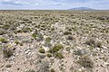 Near Tecolote Canyon - Flickr - aspidoscelis (2).jpg