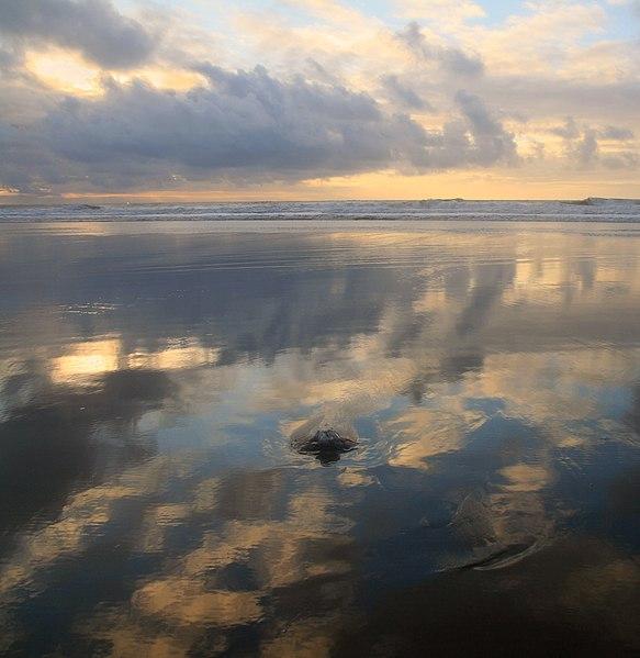 File:Negative low tide at Ocean Beach 1.jpg