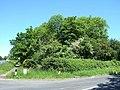 New Road Spinney near Weedon - geograph.org.uk - 181186.jpg
