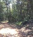 Nova Mutum - State of Mato Grosso, Brazil - panoramio - LUIS BELO (5).jpg