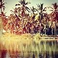 Nyangao coconut trees.jpg