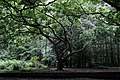 Oak trees in Burnaby, Vancouver - Morten Rand-Hendriksen.jpg