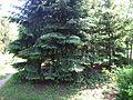 Odessa Main Botanical garden 039.jpg