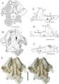 Oenosaurus.png