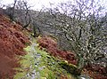 Old and wizened trees - geograph.org.uk - 625741.jpg
