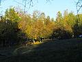 Orlyatko park, Kiev3.JPG