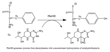 Reaction catalyzed by PheOH.