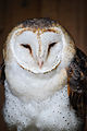 Owls @ Dragonheart, Enschede (9546689819).jpg