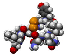 Prostrorový model oxytocinu