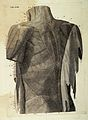 P. Mascagni, Vasorum lymphaticorum corporis Wellcome L0031989.jpg