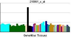 PBB GE WISP3 210861 s at tn.png