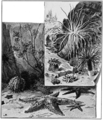 PSM V77 D223 Echinoderms and anemones.png