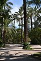 Palmeres del parc municipal, Elx.jpg