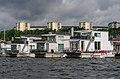 Pampas marina July 2015 01.jpg