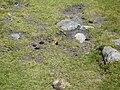 Papallona entre el Prat Fondal i l'estany Mal P1300517.jpg