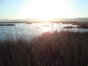 Parc Natural del Prat de Cabanes-Torreblanca (Castelló).jpg