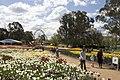 Parkes ACT 2600, Australia - panoramio (4).jpg