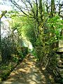 Path from Golcar to Longwood. - geograph.org.uk - 305075.jpg