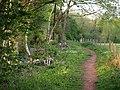 Path near Occombe - geograph.org.uk - 804597.jpg