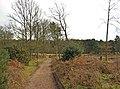Path on Kinver Edge - geograph.org.uk - 1700721.jpg