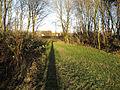 Path through Hill Crofts wood - geograph.org.uk - 1637721.jpg