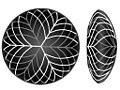 Pattern of lens fibers 2.jpg