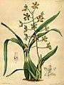 Paxton's flower garden (Plate 102) (9256203270).jpg