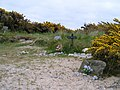 Pet Cemetery - geograph.org.uk - 820574.jpg