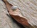 Pex Hill - Triassic Sandstone - geograph.org.uk - 22968.jpg