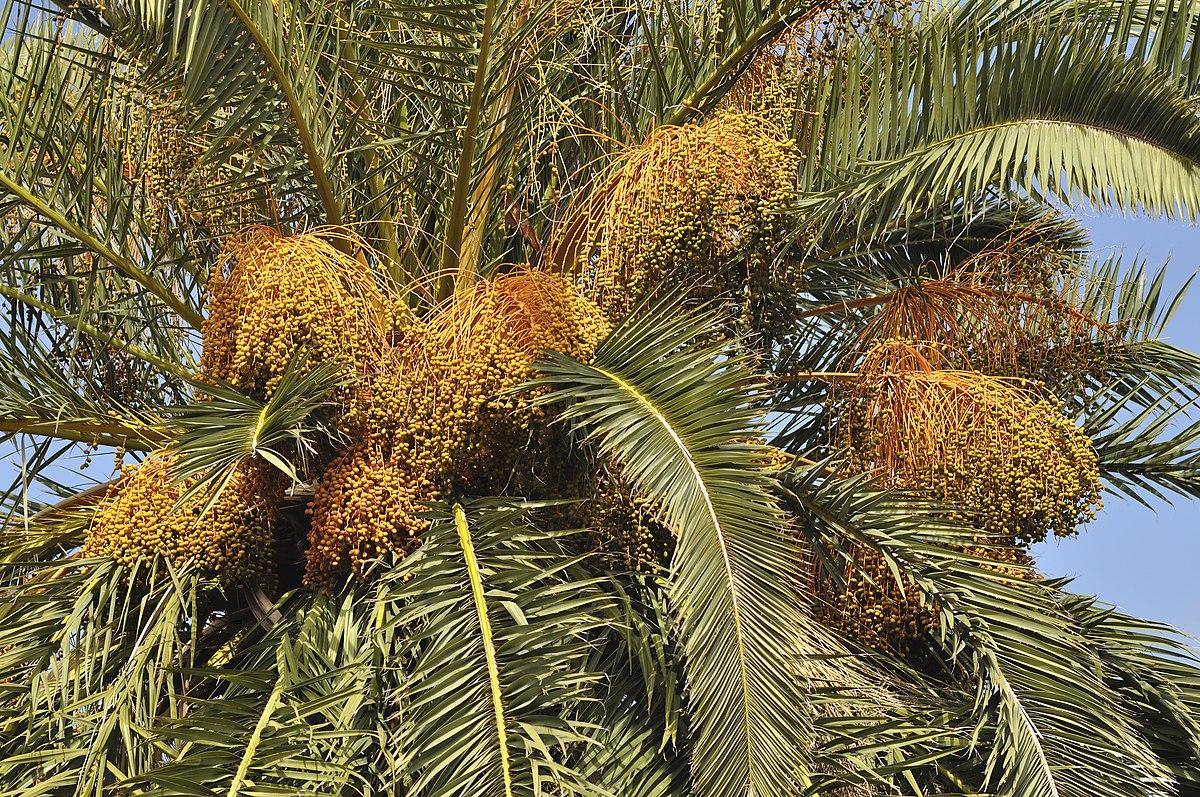 ananas tige