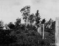 Photograph of a Fire Tower in Lower Michigan - NARA - 2127383.tif
