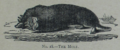 Picture Natural History - No 18 - The Mole.png