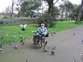 Pigeons and friend in Clarence Park, Weston-super-mare - geograph.org.uk - 950259.jpg