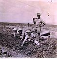 PikiWiki Israel 13934 Field workers.jpg