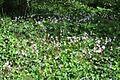 PikiWiki Israel 29285 Winter Blossom Ben-Shemen forest.JPG
