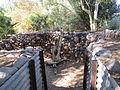 PikiWiki Israel 29430 Botanical garden of Eilat.JPG