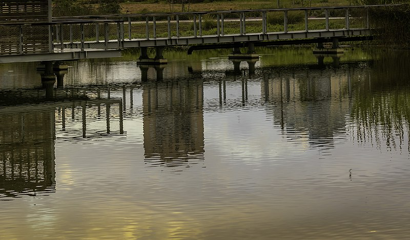 אגם האקולוגי