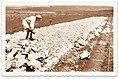 PikiWiki Israel 8741 Pioneers in Kibbutz Ein Harod.jpg