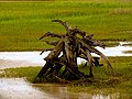 Pinckney Island National Wildlife Refuge (5957933913).jpg