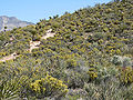 Pine Creek Canyon trail 3.jpg