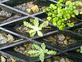 Plantes et paillasson.jpg