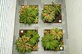 Plantes géométriques.jpg