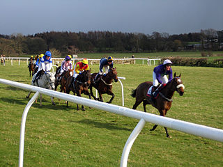 Point-to-point (steeplechase)
