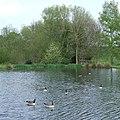 Pool near Claverley, Shropshire - geograph.org.uk - 410422.jpg