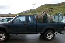 Sheep husbandry - Wikipedia, the free encyclopedia