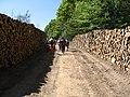 Posečena drva - panoramio.jpg