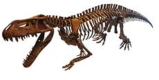 Prestosuchus chiniquensis white background.jpg