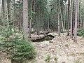 Prießnitz Dresdner Heide 2021-03-28 16.jpg